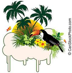 tropical madár, horgonykapák