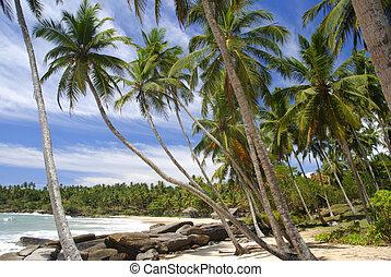 tropical paradicsom