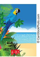 tropical tengerpart, ara papagáj, hát, madár