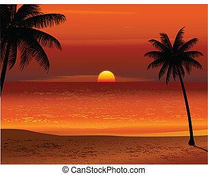 tropical tengerpart, napnyugta