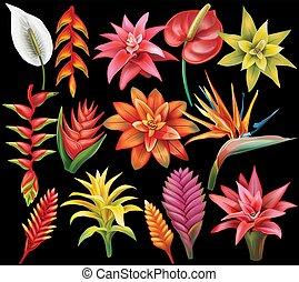tropical virág, állhatatos