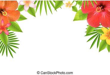 tropical virág, határ