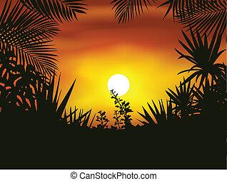 tropikus, árnykép, erdő