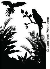 tropikus, árnykép, madár