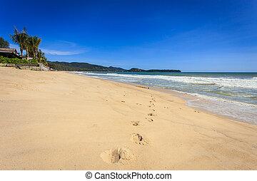 tropikus, ég, világos, tengerpart
