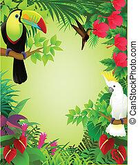 tropikus, dzsungel, madár