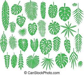 tropikus, körvonal, állhatatos, zöld