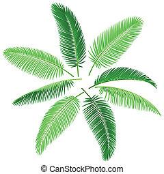 tropikus, pálma fa