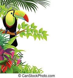 tropikus, tukán, erdő, madár