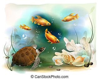 tropikus, víz alatti, ábra, világ