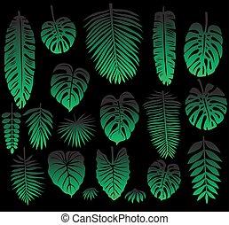 tropikus, zöld, állhatatos, fekete