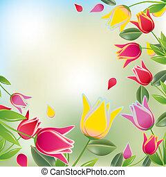 tulipán, színes, háttér