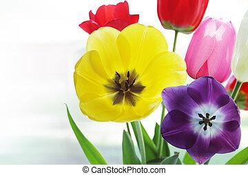 tulipánok, áttetsző