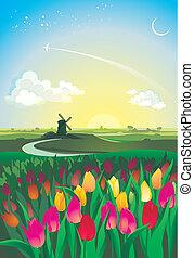tulipánok, darál, völgy, napkelte