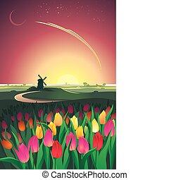tulipánok, darál, völgy, napnyugta
