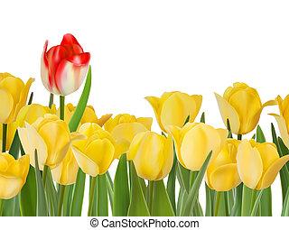 tulipánok, eps, sárga, egy, 8, red.