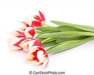 tulipánok, eredet