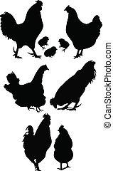 tyúk, kakas, madár, csirke