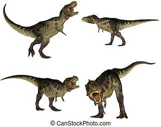 tyrannosaurus, konzervál