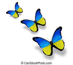 ukrán, pillangók, három, elszigetelt, lobogó, fehér