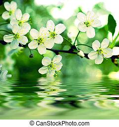 víz, apple-tree, visszfény, elágazik, virágzás