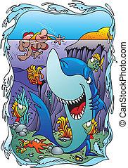 víz, cápa