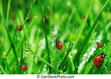 víz, friss, savanyúcukorka, zöld fű