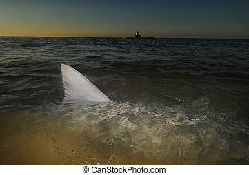 víz, kajak, uszony, felül, óceán, cápa