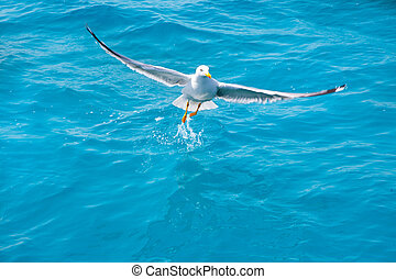 víz, sirály, madár, tenger, óceán