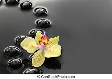 víz, zen, black háttér, csiszol, orhidea, csendes