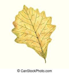 vízfestmény, levél növényen, elszigetelt, ősz, háttér, fehér