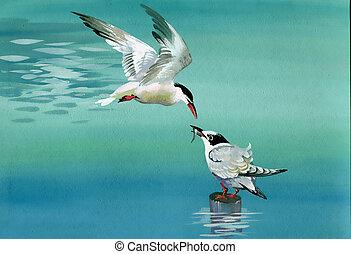 vízfestmény, madarak