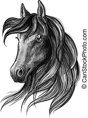 vízfestmény, portré, ló, fej, skicc