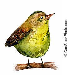 vízfestmény, rajz, madár