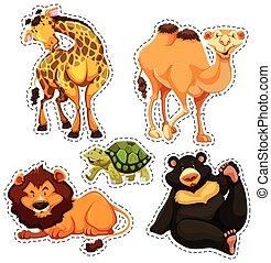 vad, böllér, állhatatos, állatok