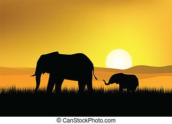 vad, elefánt