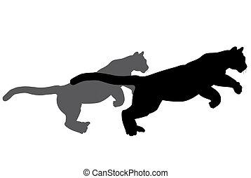 vad macska