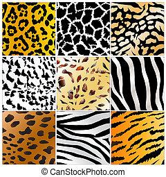 vad, példa, állatok, bőr