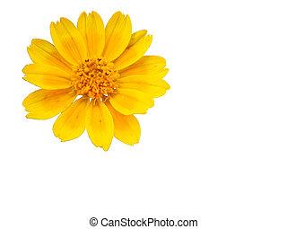 vad virág, sárga