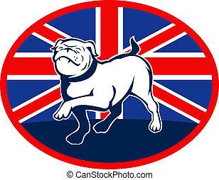 vagy, bulldog, brit, belső, háttér, nagy, állhatatos, menetelés, oval., lobogó, angol, britain, büszke
