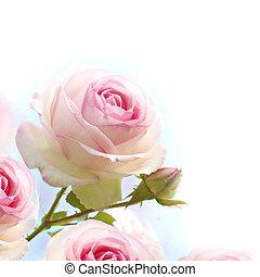 vagy, elszánt, szeret, kék, feláll, agancsrózsák, határ, kártya, virágos, becsuk, romantikus, rózsaszínű, flowers., gradiant, háttér, fehér