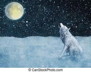 vakolás, moonlight., ordító, farkas, méltóságteljes, fehér, 3