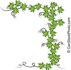 vektor, ábra, ivy., zöld