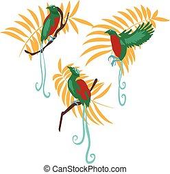 vektor, állhatatos, madár, ábra, paradicsom