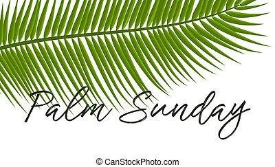 vektor, ünnep, icon., pálma, keresztény, vasárnap, ábra, őt lap, zöld