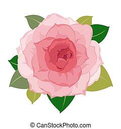 vektor, closeup, virág, babarózsa