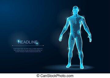 vektor, emberi hulla, wireframe, polygonal, ábra, blueprint., 3