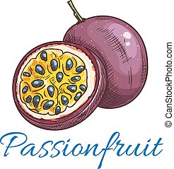 vektor, gyümölcs, indulat, szín, ikon, skicc