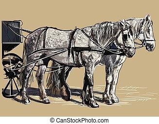 vektor, hám, lovak, színes