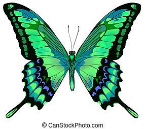 vektor, háttér, lepke, gyönyörű, elszigetelt, fehér, blue zöld, ábra
